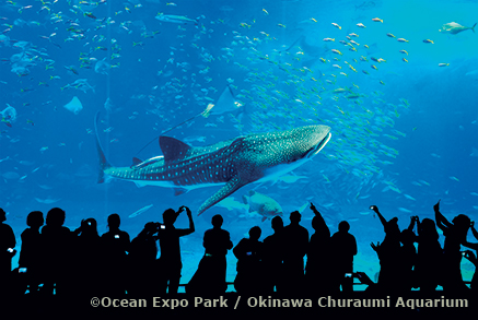 zoom_giappone-okinawa02-Churaumi-Aquarium