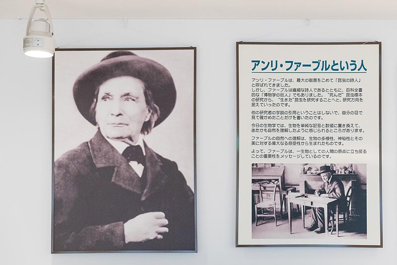 Jean-Henri Fabre in Japan