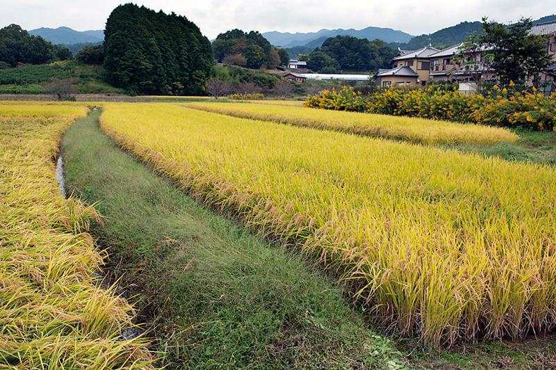 Couleur d'automne dans la campagne du departement de NaraVillage d'Asuka