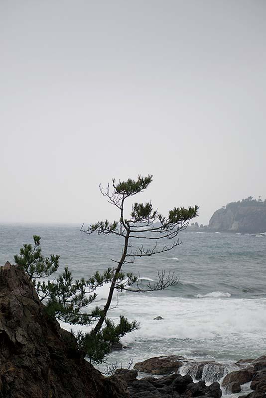 ile-oga-zoom-japon81