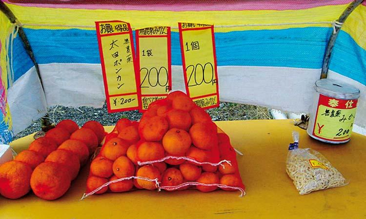 tobishima-vente-agrumes-zoomjapon85