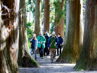 GIAPPINE_Tohoku-travel-program_Storied-Soil-–-Natural-and-Cultural-Wonders-of-Tohoku_-Japan-Towadako-forest