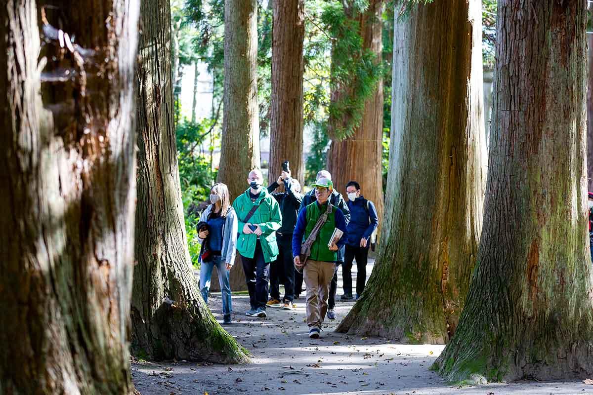 Japan_Tohoku-travel-program_Storied-Soil-–-Natural-and-Cultural-Wonders-of-Tohoku_-Japan-Towadako-forest